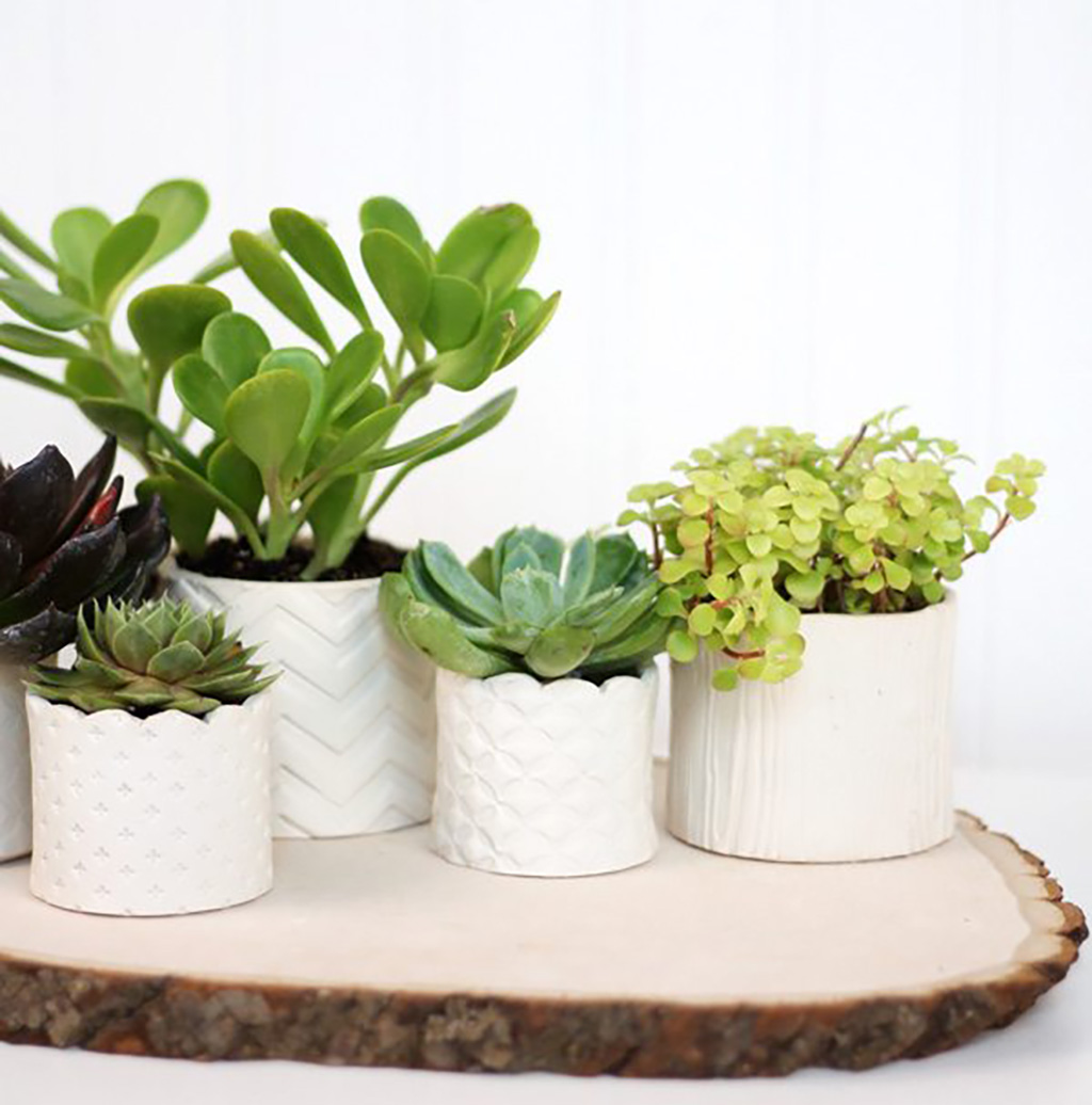 Diy Stamped Clay Succulent Pots Damask Love