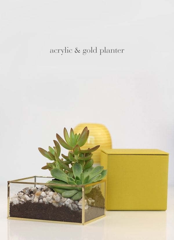 DIY Acrylic and Gold Succulent Planter